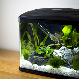 Interpet Aquarium And Products For Keeping Tropical Or